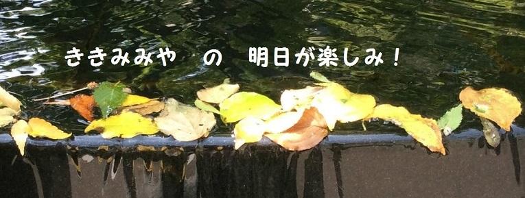 ききみみやの「明日が楽しみ!」