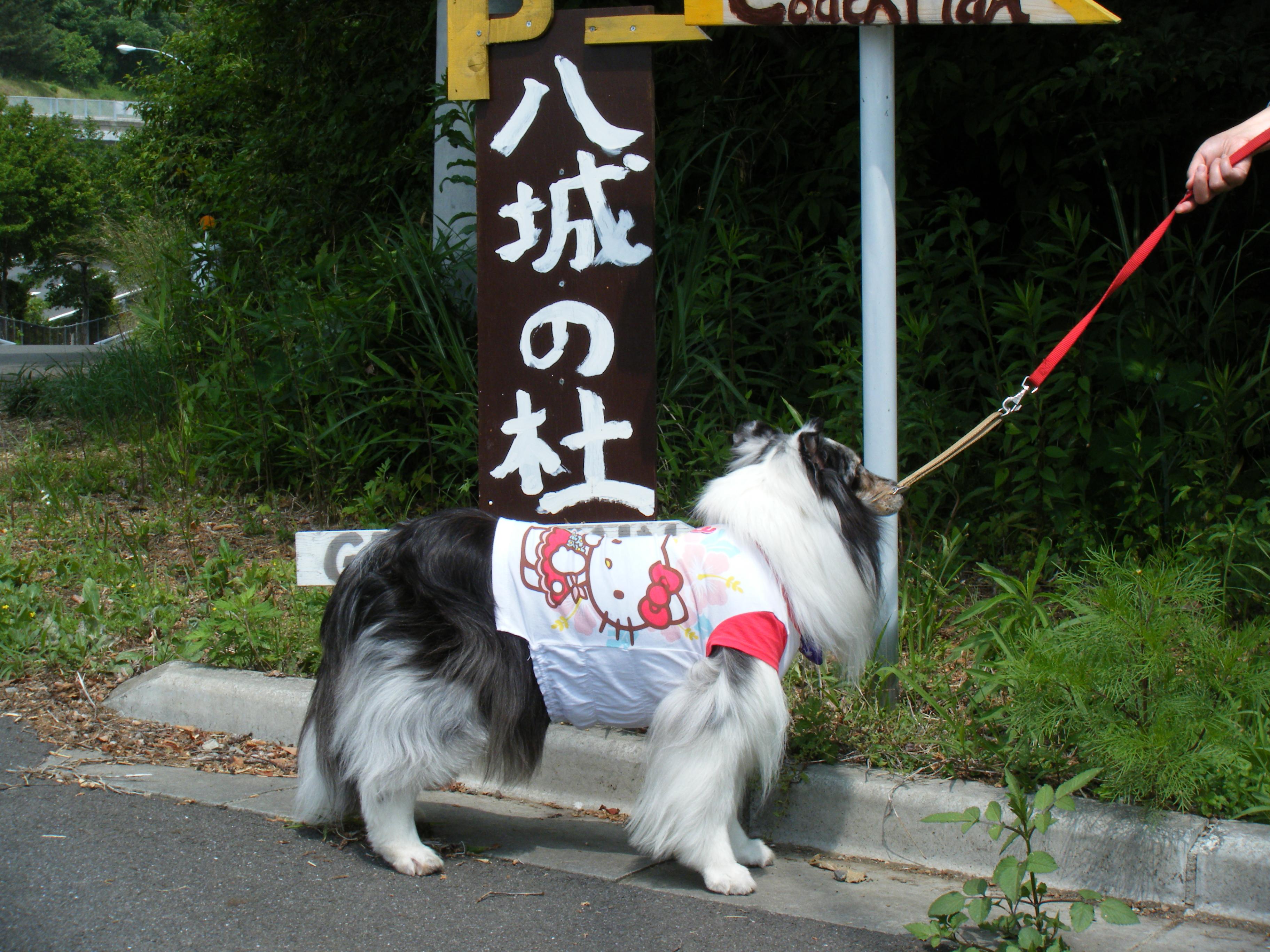 群馬県 ゲスト・イン 八城の杜 の写真g79668