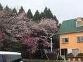 熊本県南阿蘇 ペンションハーモニー