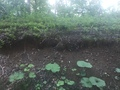 森のゆ 花神楽