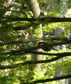 マキノ白谷温泉 ペンション カッコーの巣