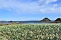 海のある伊豆高原 オーベルジュ ピーコック ヒル
