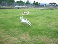 B&B犬遊楽