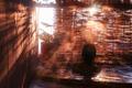 ニッポニア高原宿 夢海月