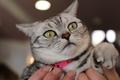 伊豆高原 猫のいるお宿 プチホテル フロマージュ