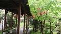 鷹ノ巣温泉 吊り橋と離れの宿 鷹の巣舘
