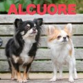 Pet goods shop ALCUORE