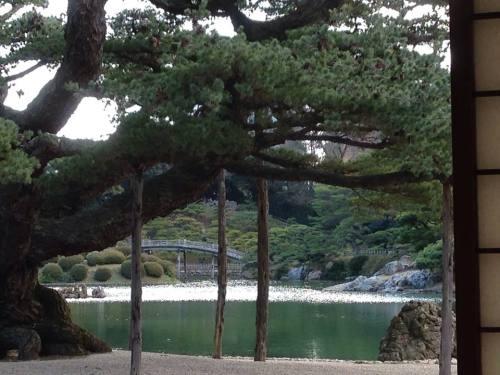 栗林公園・五葉松.jpg