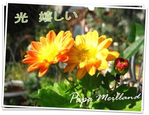 今日の庭1.jpg