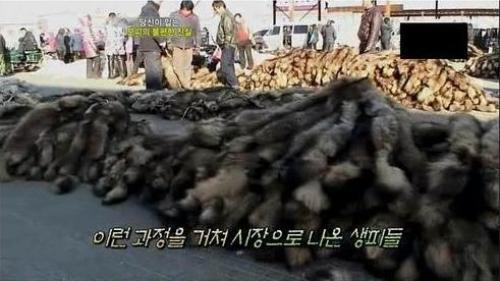 韓国でも中国の実態が公開されて...