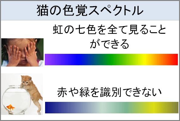 色覚スペクトル.jpg