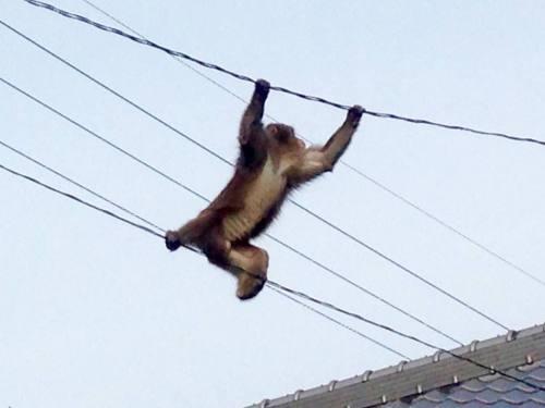 11-29 3.逃げるお猿さん
