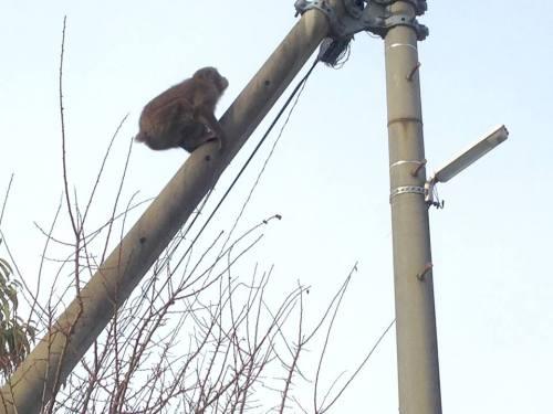 11-29 1.逃げるお猿さん