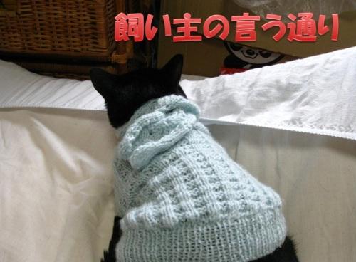 猫のセーター17.jpg