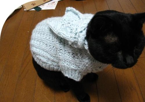 猫のセーター15.jpg
