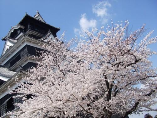 熊本城の桜その2.jpg