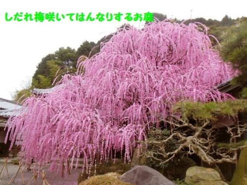 imageCANKVG2O3.10moji.jpg