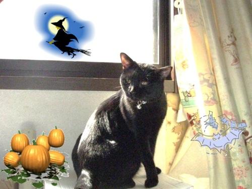 猫のセーター8.jpg