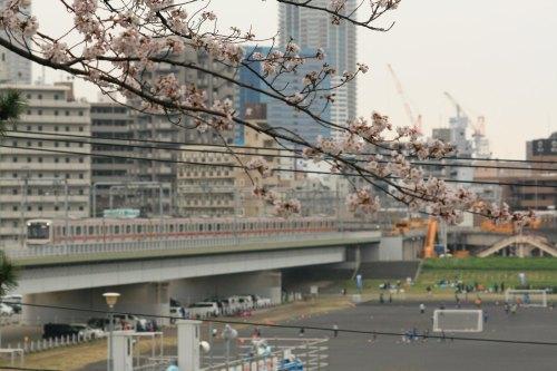 Cherry blossoms in Tamagawadai Park and Tokyu 5050 Series