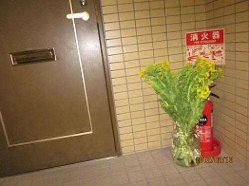 IMG_1682菜の花3.jpg