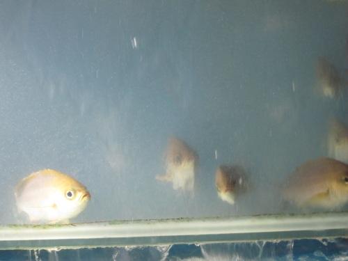 IMG_4091魚.jpg