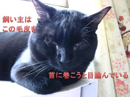 猫のセーター5.jpg