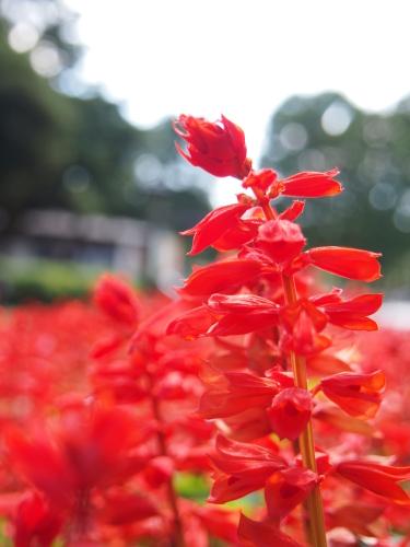 水元公園2012.9.24 035.jpg