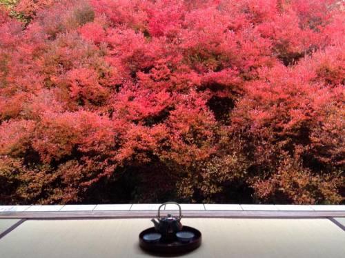 2015-11-10 09.安国禅寺