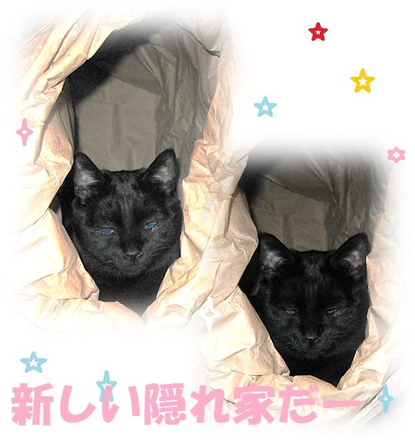 猫の隠れ家.jpg