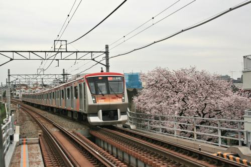 Tokyu 6000 Series with cherry blossoms beside track