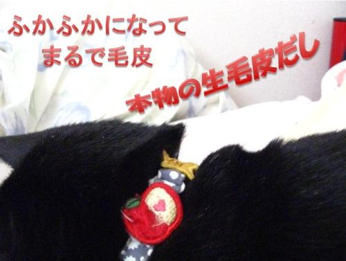 猫のセーター3.jpg