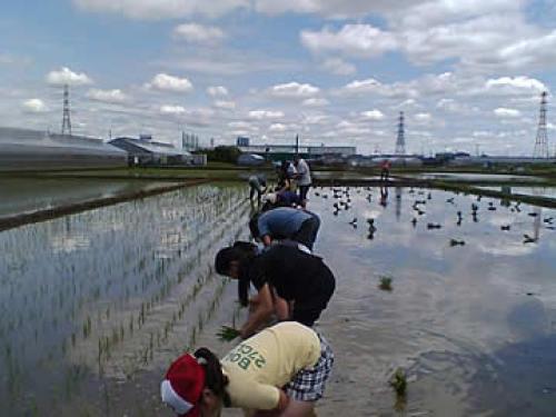 田植え2012.jpg