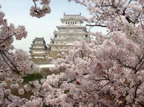 2016-04-06 10.姫路城と桜