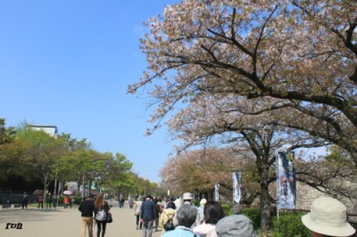 kyotosatoshi 539.JPG