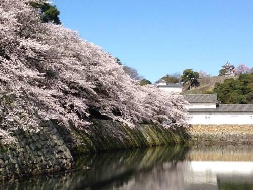 彦根城の外堀3.jpg
