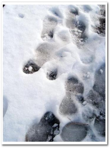 柴又 雪の風景005.jpg
