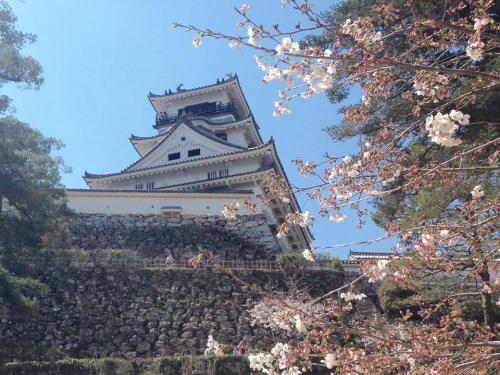 高知城と桜.jpg