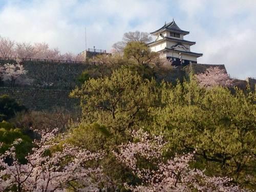 2015-04-02丸亀城と桜.jpg