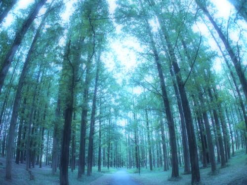 水元公園2012.9.24 007.jpg