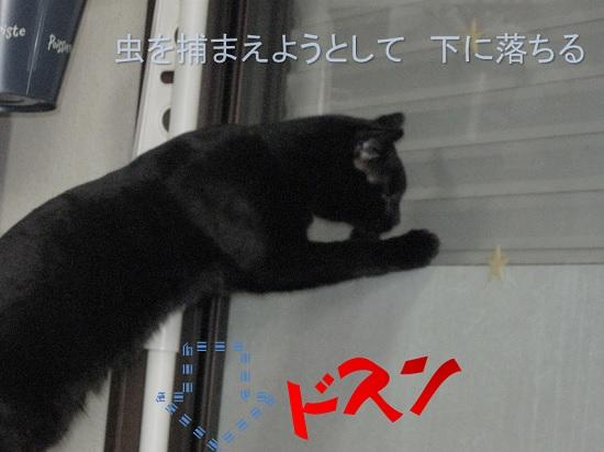 落下猫.jpg