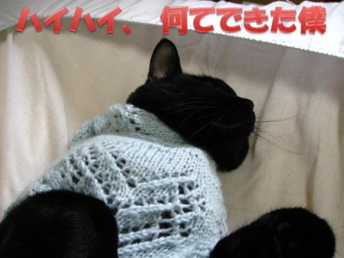 猫のセーター18.jpg