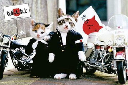 猫に舐められるのは信頼の証 - derofami.com