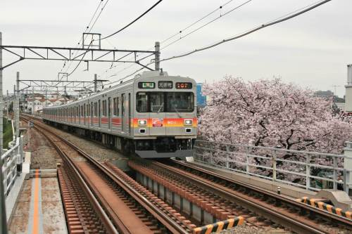 Tokyu 9000 Series with cherry blossoms beside track