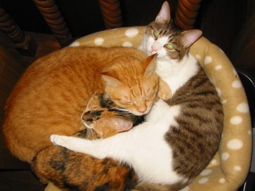 猫団子.jpg