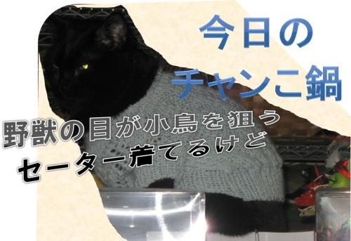 猫のセーター1.jpg