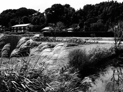 21世紀の森2012.9.18 009.jpg