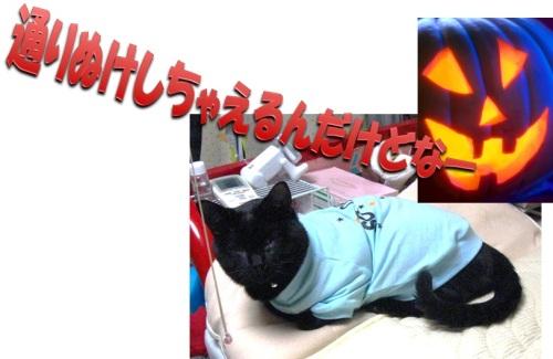 チャン4.jpg