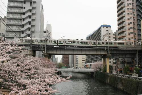 Tokyu 1000 Series with cherry blossoms under track