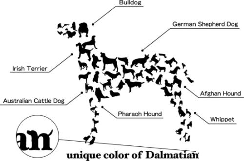 ダルメシアンの画像 p1_14