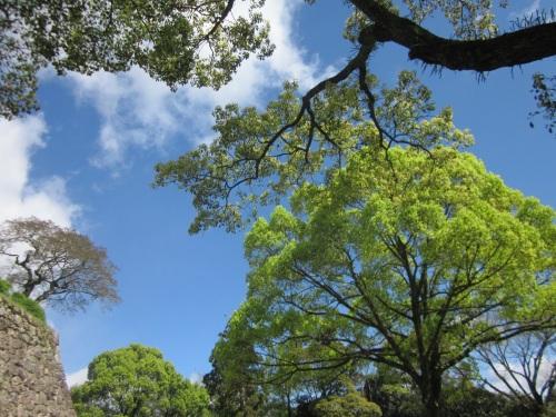 IMG_4551きれいな緑.jpg